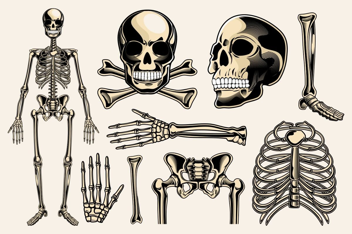 Skeleton Graphics